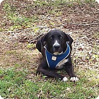 Adopt A Pet :: Jericho - Sturbridge, MA