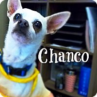 Adopt A Pet :: Chanco - Defiance, OH