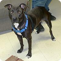 Adopt A Pet :: Mia - Eastpoint, FL