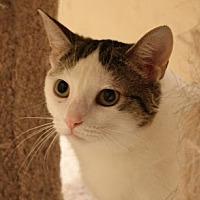 Adopt A Pet :: Ivy - Richmond Hill, ON