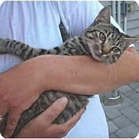 Adopt A Pet :: Abbey - New Egypt, NJ