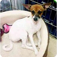Adopt A Pet :: J.R. - Gilbert, AZ