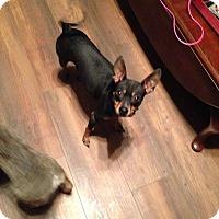 Adopt A Pet :: MANNY - Higley, AZ