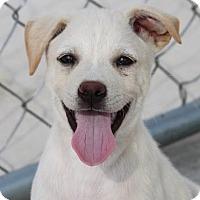 Adopt A Pet :: *Branch - PENDING - Westport, CT