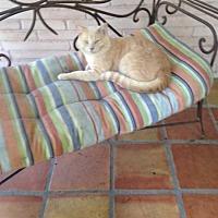 Adopt A Pet :: Howie - San Antonio, TX