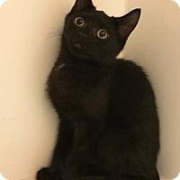 Adopt A Pet :: Benson - Merrifield, VA