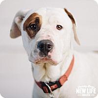 Adopt A Pet :: Brian - Portland, OR