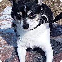Adopt A Pet :: Rex - Carthage, NC