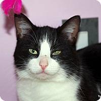 Adopt A Pet :: Carter - Albany, NY