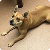 Adopt A Pet :: Tila 9808 - Columbus, GA