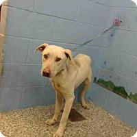 Adopt A Pet :: A502827 - San Bernardino, CA