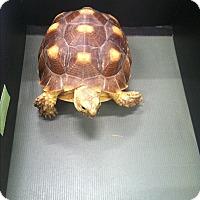 Adopt A Pet :: Trevor - Patterson, NY