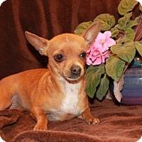 Adopt A Pet :: Uno - Spring Valley, NY