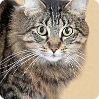 Adopt A Pet :: Louise - Encinitas, CA