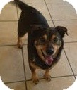 Beagle Mix Dog for adoption in Justin, Texas - Gunner