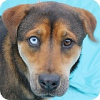 Adopt A Pet :: Blue Eyed Bree - New Roads, LA