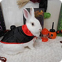 Adopt A Pet :: Otto - Roseville, CA
