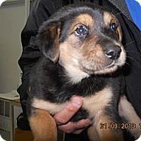 Adopt A Pet :: Charlie - South Jersey, NJ