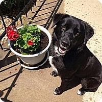 Adopt A Pet :: Hooty - Hancock, MI