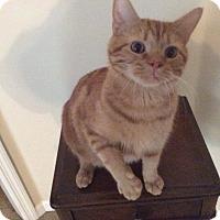 Adopt A Pet :: PADDY: Urgent - Madison, AL