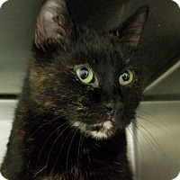 Adopt A Pet :: Matilda - Elyria, OH