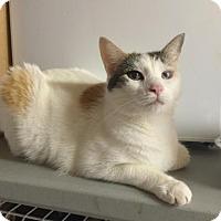 Adopt A Pet :: LACEY - Flint HIll, VA