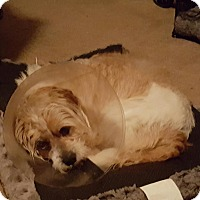 Adopt A Pet :: Tater - Freeport, NY