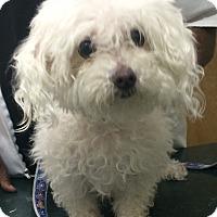 Adopt A Pet :: Kismet - Oak Ridge, NJ