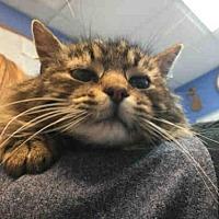 Adopt A Pet :: SCARLETT - Canfield, OH