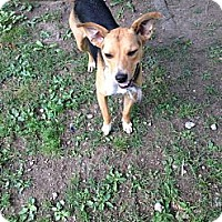Adopt A Pet :: Mandy ~ Adoption Pending - Youngstown, OH