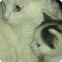 Adopt A Pet :: ANNA - Medford, NY
