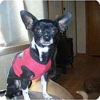 Adopt A Pet :: Bubbles - Johnsburg, IL