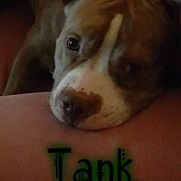 Adopt A Pet :: Tank - Eden, NC