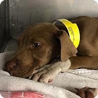 Adopt A Pet :: Raleigh - Jackson, MS