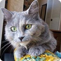 Adopt A Pet :: StarDust - Orlando, FL