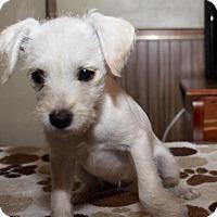 Adopt A Pet :: Opal - Russellville, KY