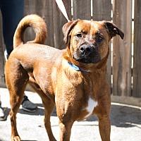 Adopt A Pet :: Oden - Fallbrook, CA