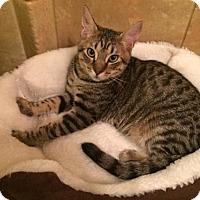 Adopt A Pet :: Clyde (MP/JHP) 8.22.16 - Orlando, FL