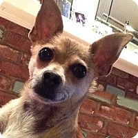 Adopt A Pet :: Lita - La Habra Heights, CA