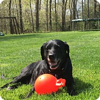 Adopt A Pet :: Katie - Warrington, PA