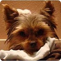 Adopt A Pet :: Sammie - Tallahassee, FL
