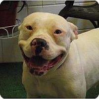 Adopt A Pet :: Sasha - Bloomingdale, GA