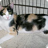 Adopt A Pet :: Shannon - Scottsdale, AZ