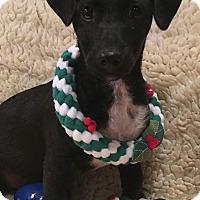 Adopt A Pet :: Turbo - Temecula, CA