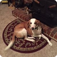 Adopt A Pet :: Leggz - Richmond, VA