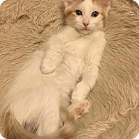 Adopt A Pet :: Frazier - Scottsdale, AZ
