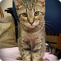 Adopt A Pet :: Olympia - Trevose, PA