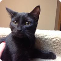 Adopt A Pet :: Pickles - Bridgeton, MO
