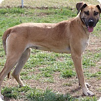 Adopt A Pet :: Mary Mae - Waldorf, MD