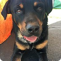 Adopt A Pet :: Pecos - Gilbert, AZ